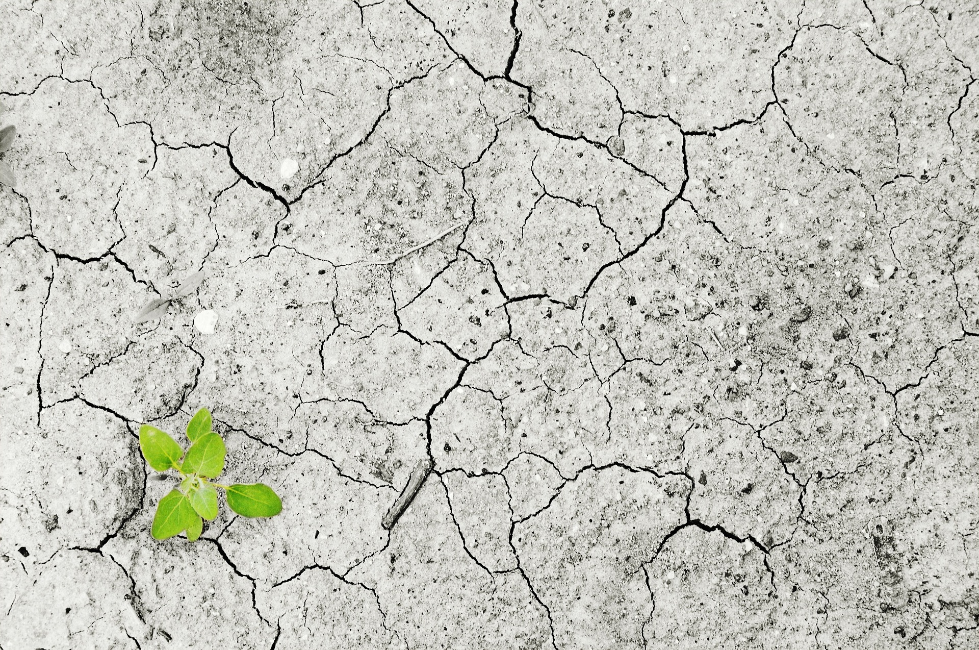Will the Climate Law stop desertifikation?