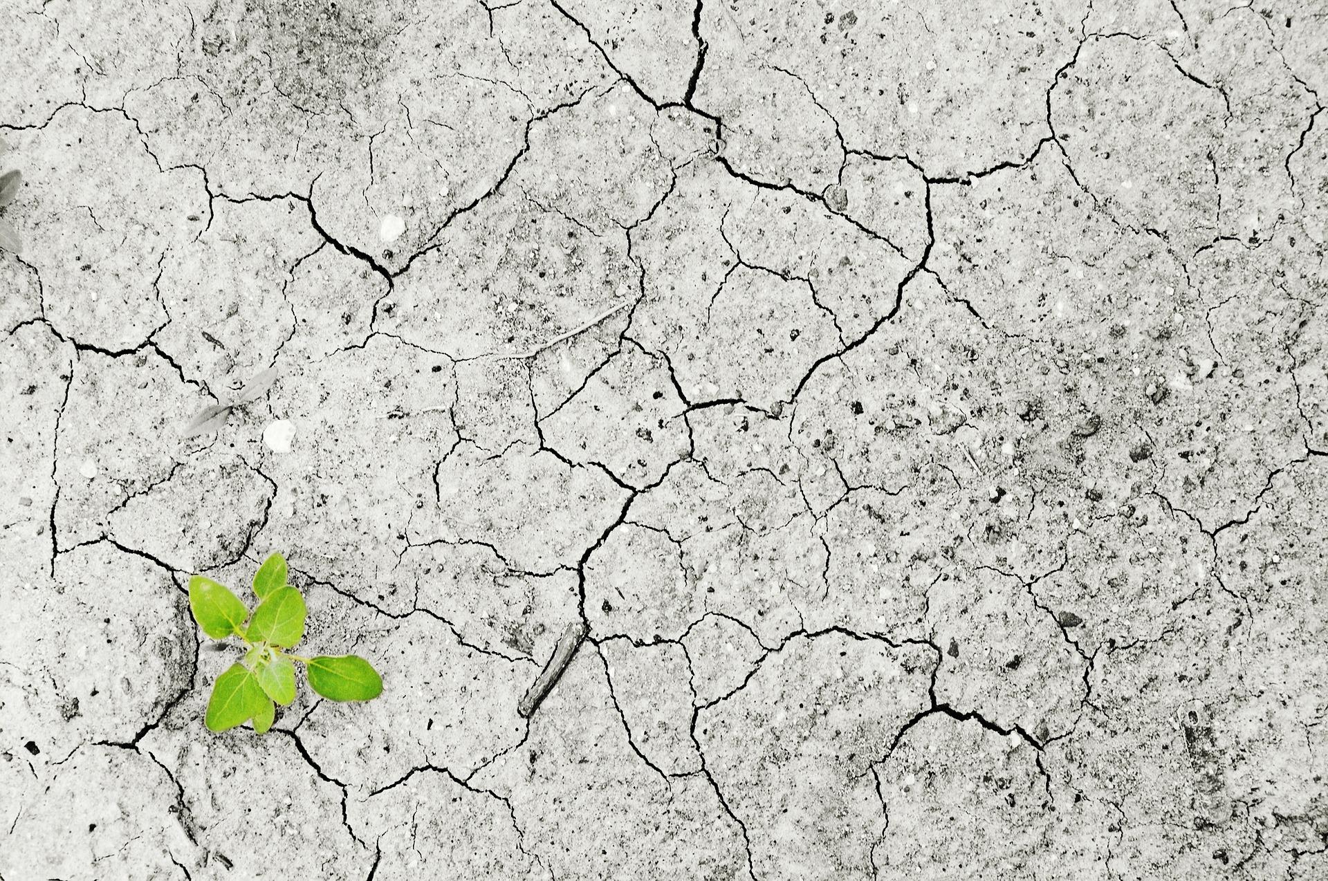 Wird das europäische Klimagesetz die Desertifikation aufhalten können?