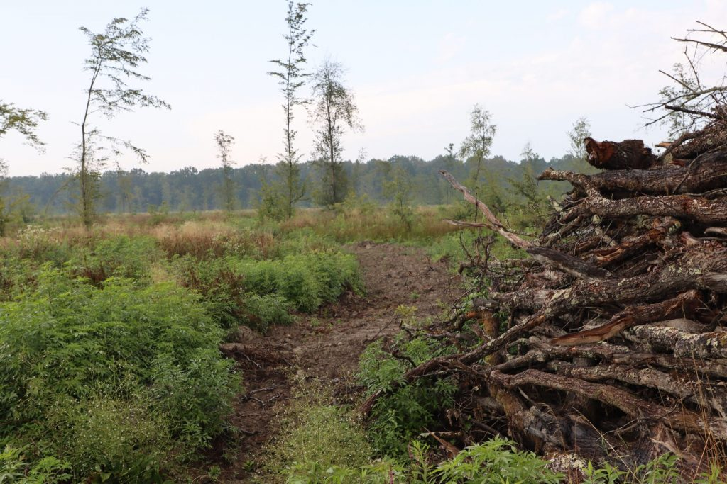 Open letter to Commissioner for Environment on illegal clear-cuts in Croatia